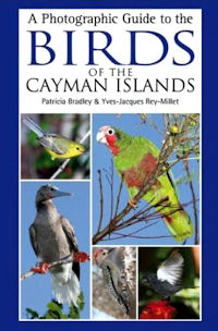 Vogelgids Kaaiman eilanden - Cayman Islands   Helm field guides